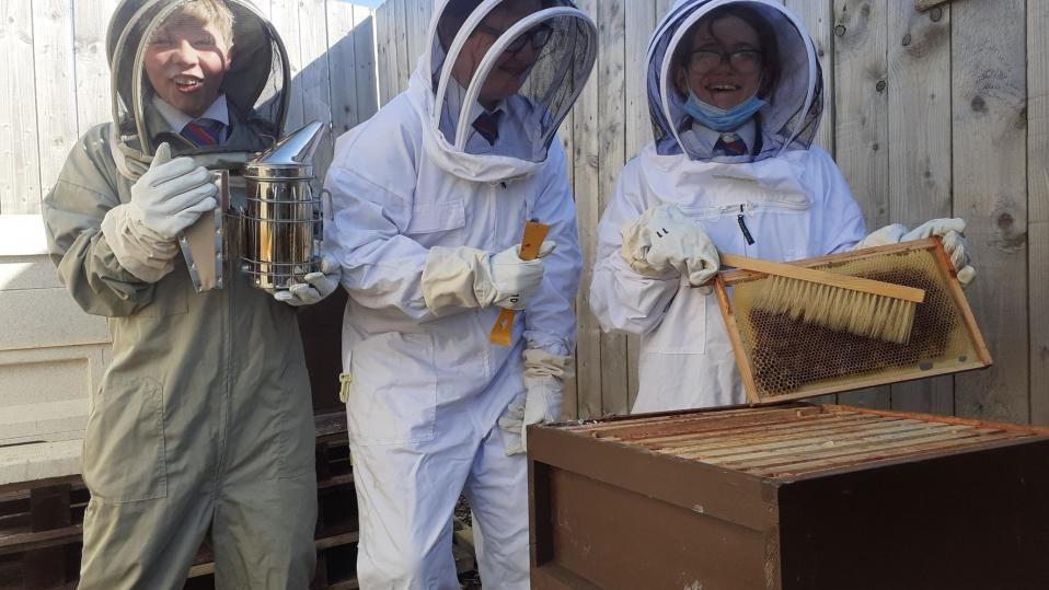 How school bee projects can engage students in sustainability issues and climate change