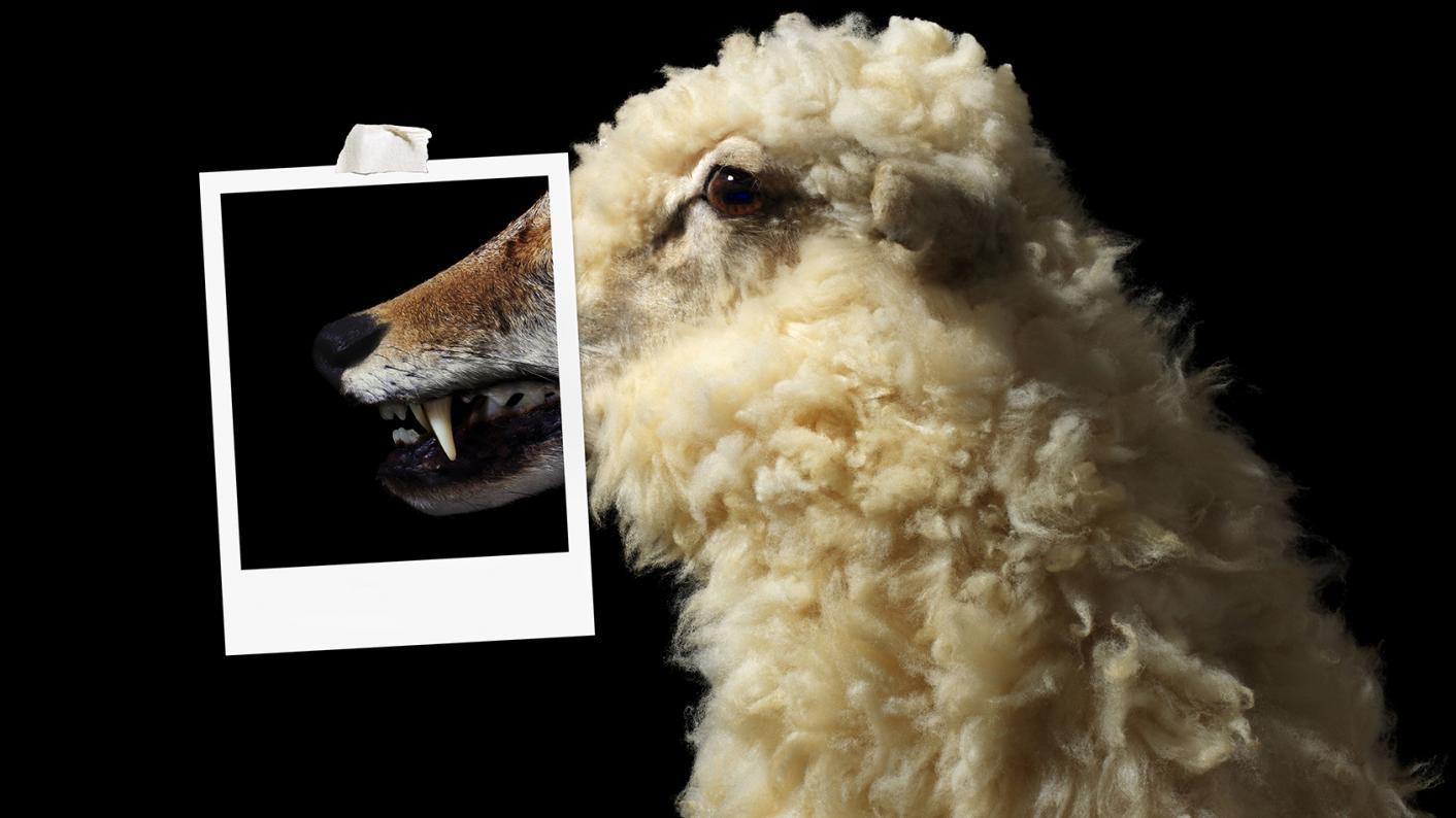 Sheep/ woolf