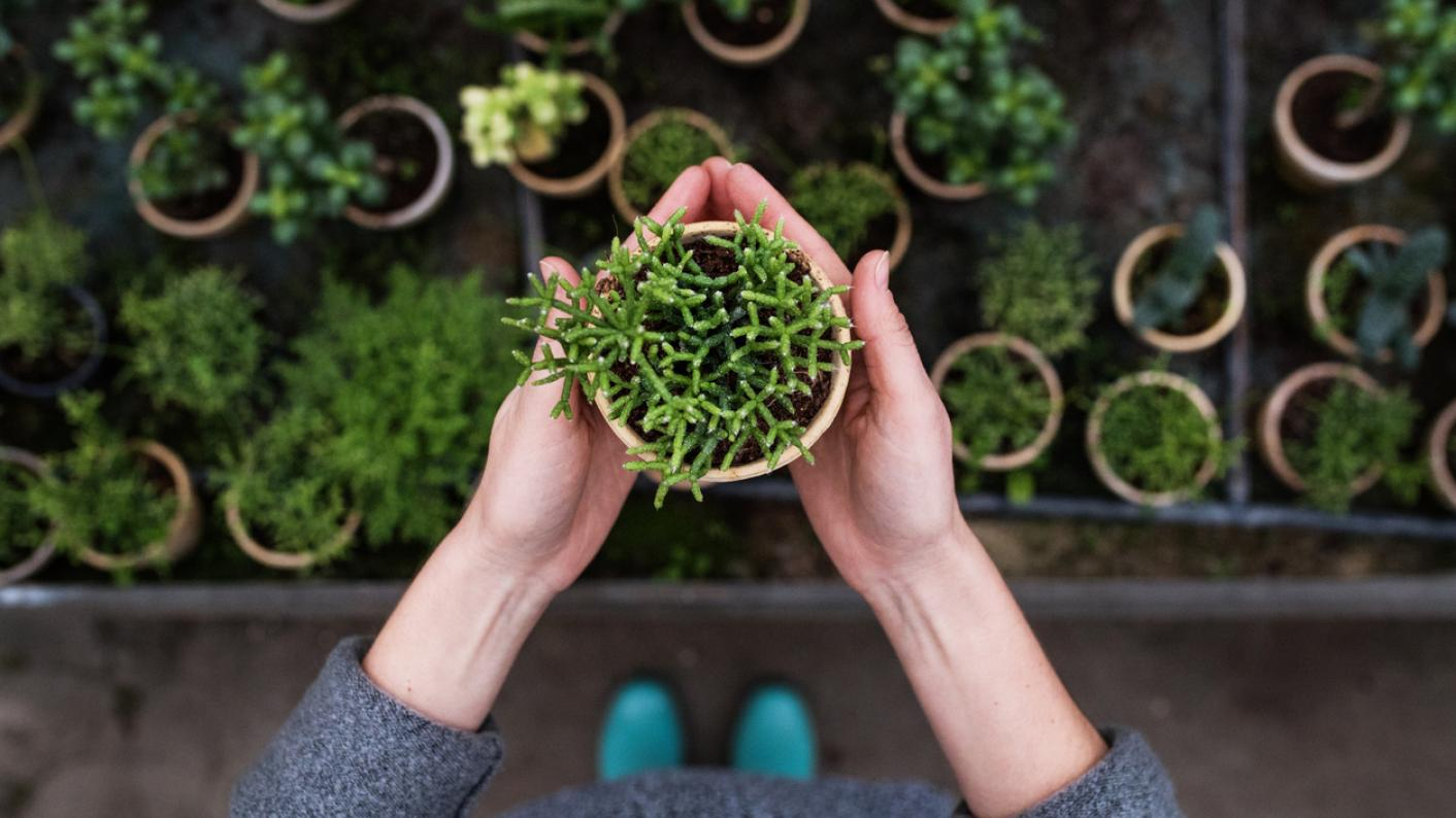 Hands holding plant pot