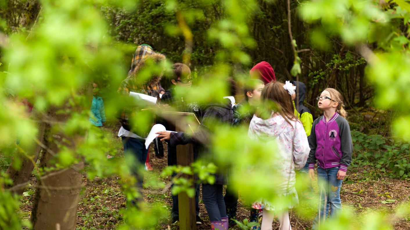 Children in nature taking part in an activity