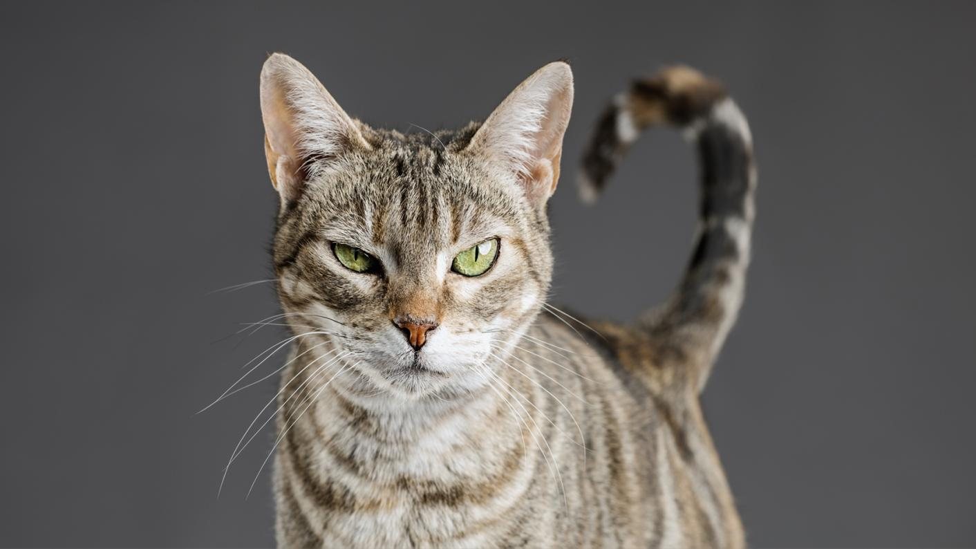 Cat evil stare
