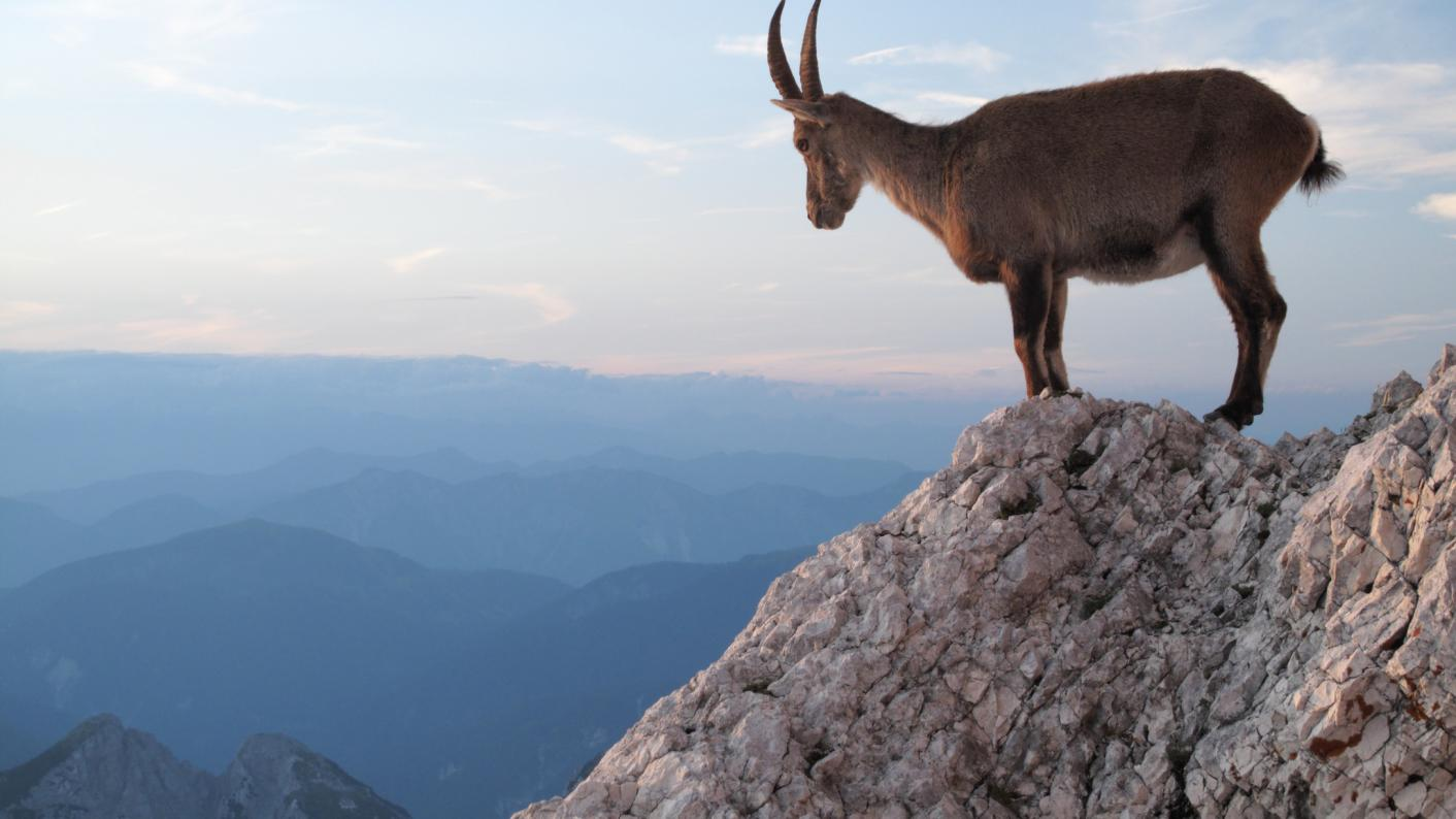 Coronavirus: Why teachers are like mountain goats