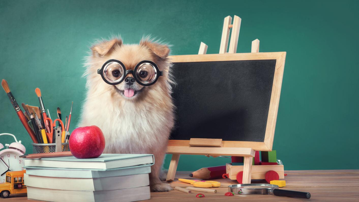 Animals in education
